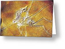 Archaeopteryx Lithographica Greeting Card
