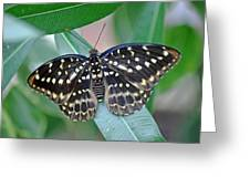 Archduke Butterfly Greeting Card