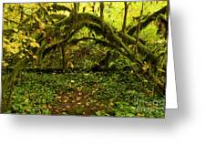 Arches In The Rainforest Greeting Card