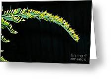 Arching Goldenrod Greeting Card