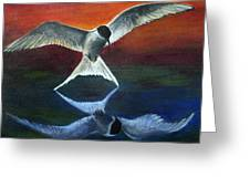 Arctic Tern Reflection Greeting Card
