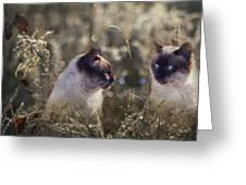 Are You Dreaming About Me - Siamese Feral Cat Greeting Card
