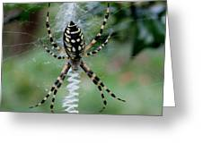 Argiope Aurantia Greeting Card by Sean Green