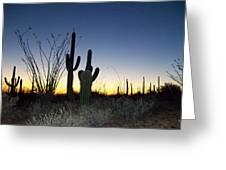 Arizona Desert Sunset Greeting Card