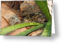 Arizona Rattler Greeting Card