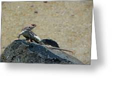 Arizona Wildlife Greeting Card