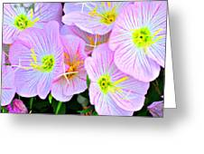 Arkansas Wildflowers Greeting Card