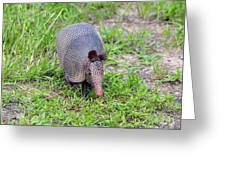 Armored Armadillo 01 Greeting Card