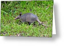 Armored Armadillo 02 Greeting Card