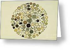 Arrangement Of Diatoms Greeting Card