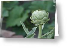 Artichoke In The Garden Greeting Card