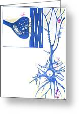 Artwork Of A Nerve Cell Of The Brain & A Synapse Greeting Card