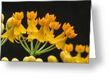 Asclepia Greeting Card