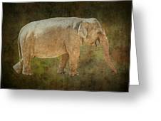 Asian Elephant Greeting Card