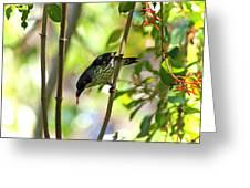 Asian Glossy Starling Greeting Card
