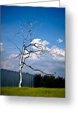 Askew - Roxy  Paine Greeting Card