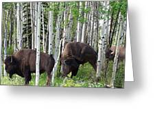 Aspen Bison Greeting Card