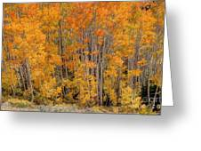 Aspen Forest In Fall - Wasatch Mountains - Utah Greeting Card