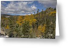 Aspen Glow With Snow Greeting Card