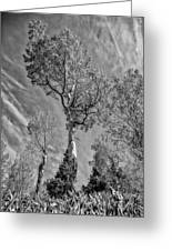 Aspen In The Sky Bw Greeting Card