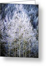 Aspen Lace Greeting Card