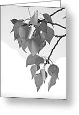 Aspen Leaves In Black And White Greeting Card
