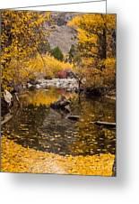 Aspen Leaves On Stream Greeting Card