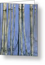 Aspen Poplar Trees Reflected In Spring Greeting Card