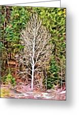 Aspen Tree On A Forest Road Greeting Card