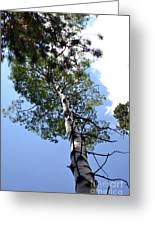 Aspen Tree Greeting Card