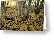 Aspen Trees Stand Above A Carpet Greeting Card