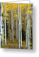 Aspen Trunks Greeting Card