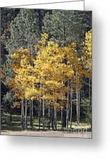 Aspens In Color Greeting Card