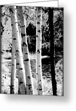 Aspens L Greeting Card