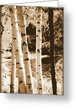 Aspens Llll Greeting Card