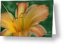 Aspiring Notion Greeting Card