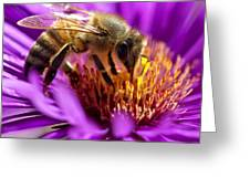 Aster Bee Greeting Card