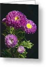 Aster Greeting Card