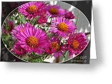 Aster Named September Ruby Greeting Card