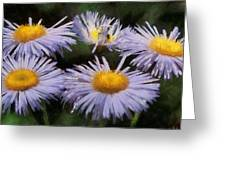 Asters Painterly Greeting Card by Ernie Echols