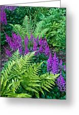 Astilbe And Ferns Greeting Card