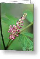 Astlibe Greeting Card