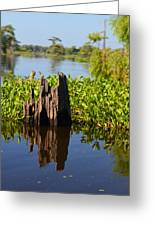 Atchafalaya Basin 21 Greeting Card