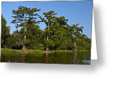 Atchafalaya Basin 41 Greeting Card