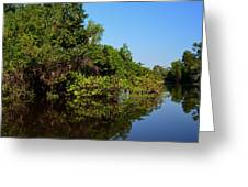 Atchafalya Basin Greeting Card