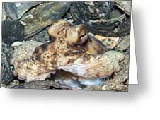Atlantic Octopus In Shell Debris Greeting Card