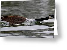 Attack Of The Canadian Geese Greeting Card