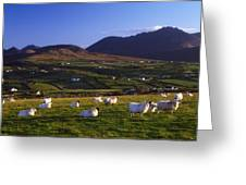 Aughrim Hill, Mourne Mountains, County Greeting Card