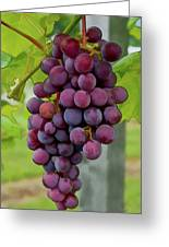 August Grapes Greeting Card