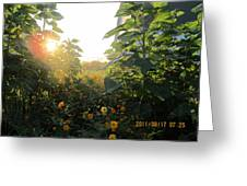 August Sunrise In The Garden Greeting Card